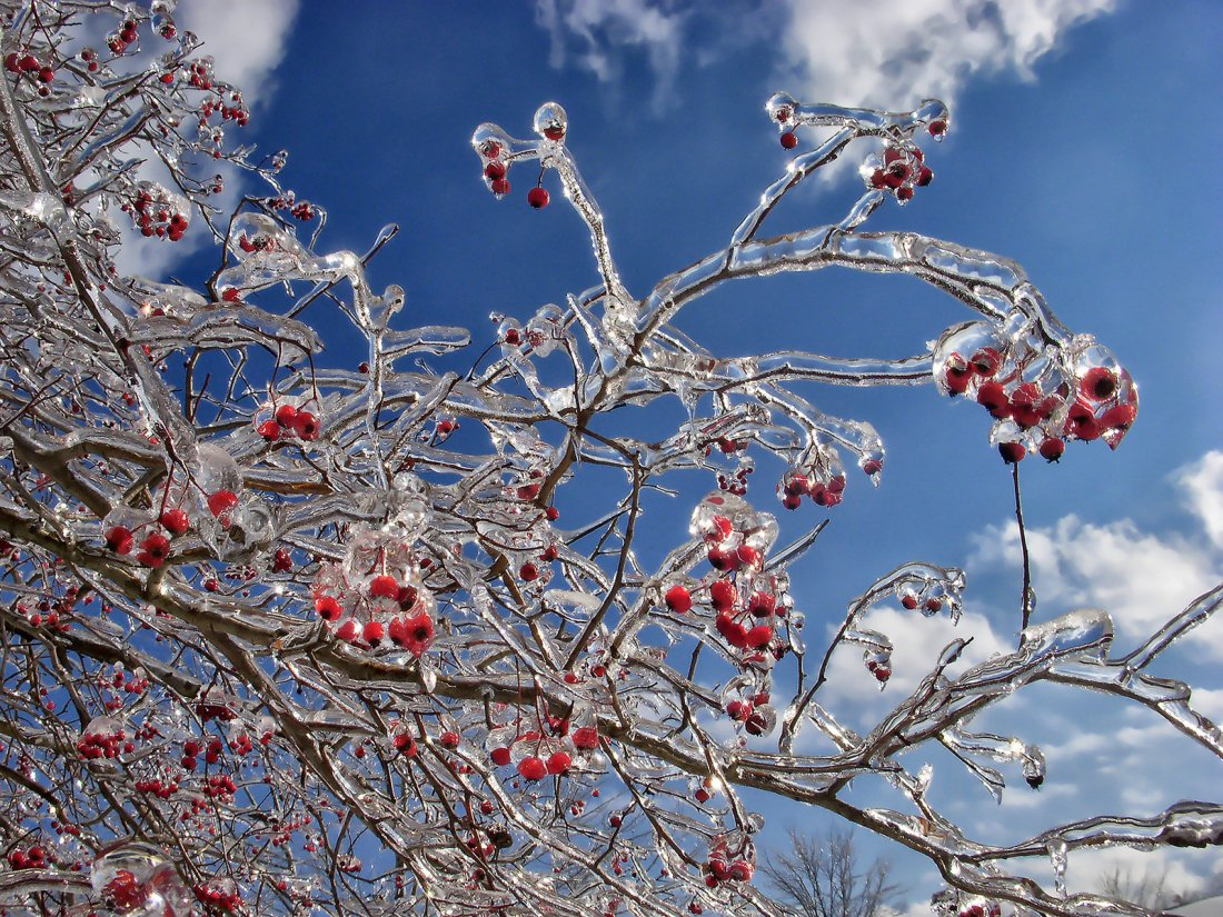 crystal_branches_02_by_sixwings