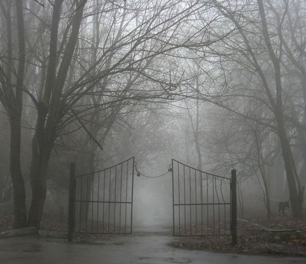 11df2424adb58cfdaacbc952c0569e92--creepy-fog-creepy-woods
