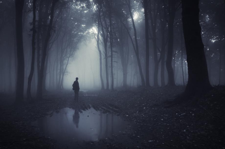 dark-forest-2