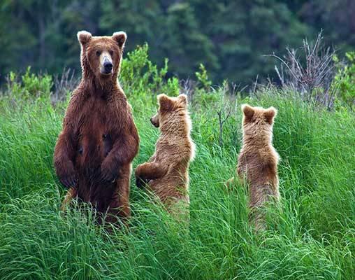 Katmai-National-Park__508x400